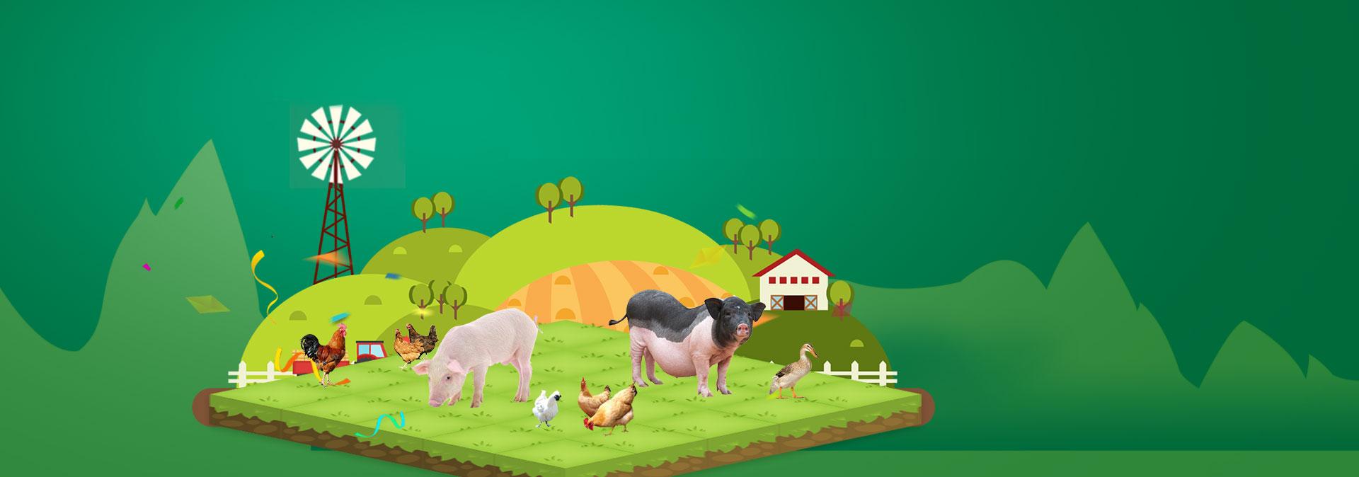 qy188千亿国际养殖成本更低、更赚钱,做高性价比饲料领导者
